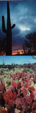 Desert Southwest Scenery Scenic Bookmark #7 Saguaro Sunset Picacho Peak Arizona Pink Cholla Cactus Forest Saguaro National Monument