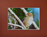 Sparrow Mystique 8X10 Matted Photo Birds Wildlife