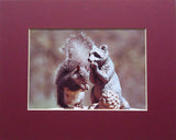 Squirrel & Friend 8X10 Matted Photo Wildlife