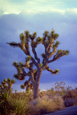 Storm Brewing 8X10 Matted Photo Southwest Joshua Tree National Park