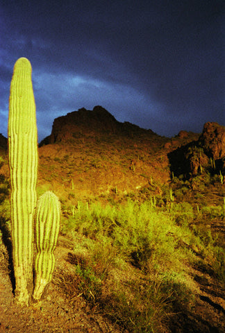 Storm Over Picacho 8X10 Matted Photo Southwest Desert Cactus Picacho Peak Arizona