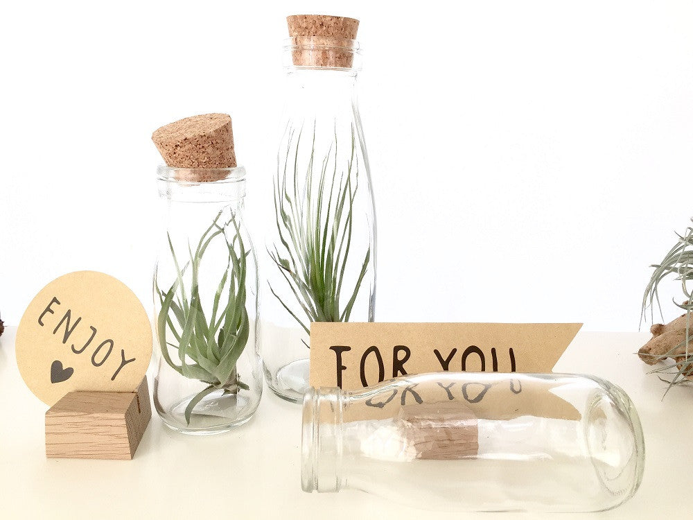AIRPLANTS in a Bottle