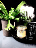 INTENZ HOME Asplenium Amy