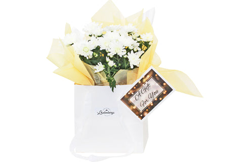 Flower gift with white flowers wrapped in a soft peach vilene presented in a glossy white gift bag delivered within Auckland NZ