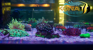 Saltwater tanks are FULL!