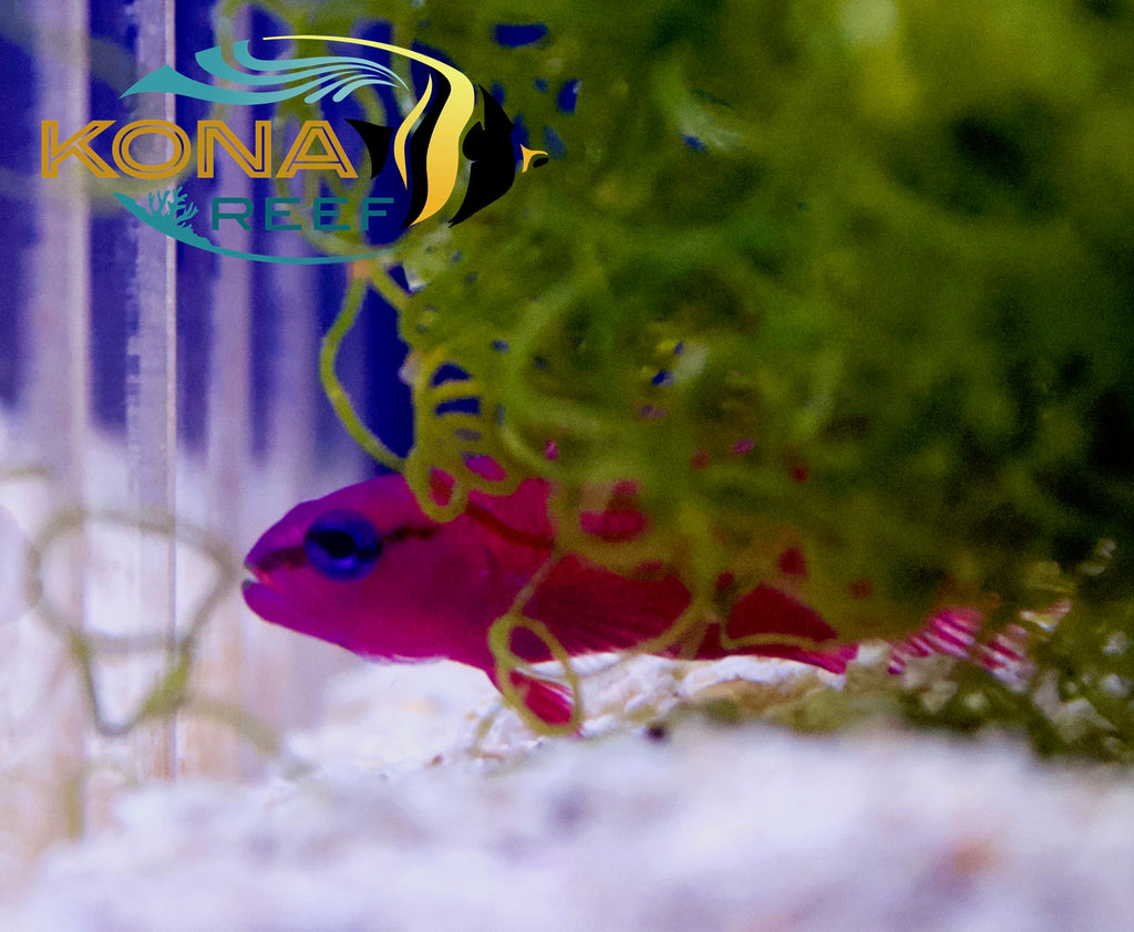 ORA & Reef Nutrition In! Seahorses, Clowns, Live Foods & More!