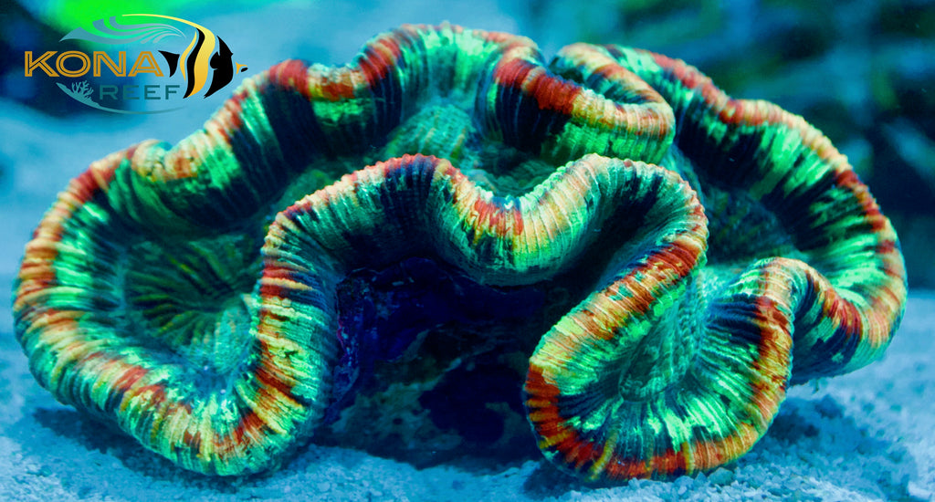 Store Update July 11! Tons of Coral & Fish in!