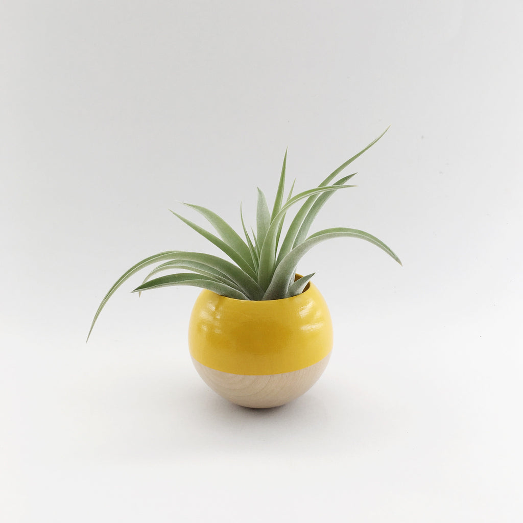 Sphere Pod Planter // Yellow + Wood