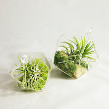 Load image into Gallery viewer, Small Geometric Air Plant Aerium