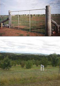 Rabbit proof fencing