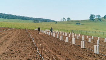 truffle irrigation