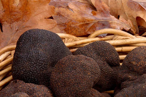 Black Truffles from the Provence