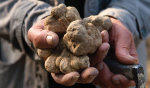 White Italian Truffles from Alba