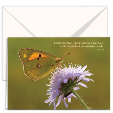 Cards: Flower with Butterfly (pack of 3)