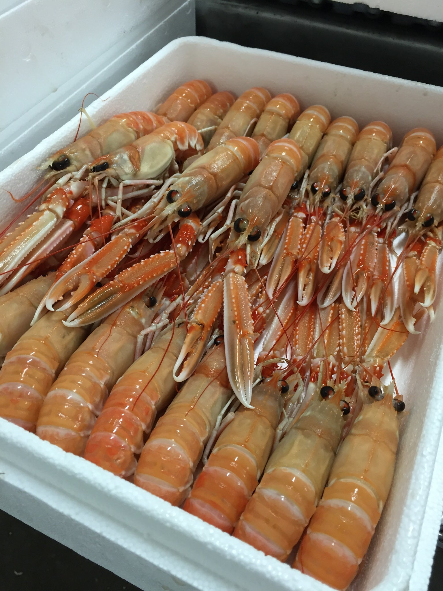 Frozen Whole Langoustine - 1.35kg net weight   (Size 0 / 14-16 pieces  per poly tray)