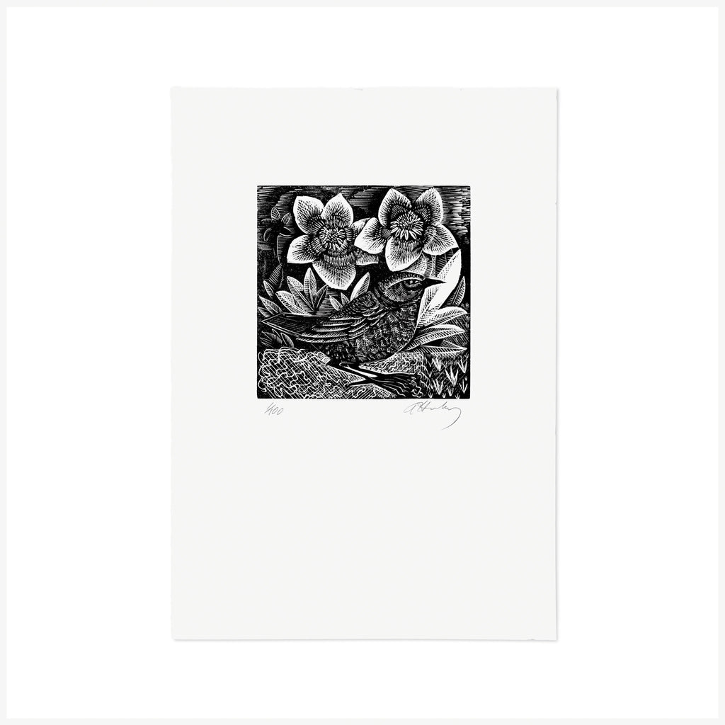 D is for Dunnock - Wood Engraving - Angela Harding