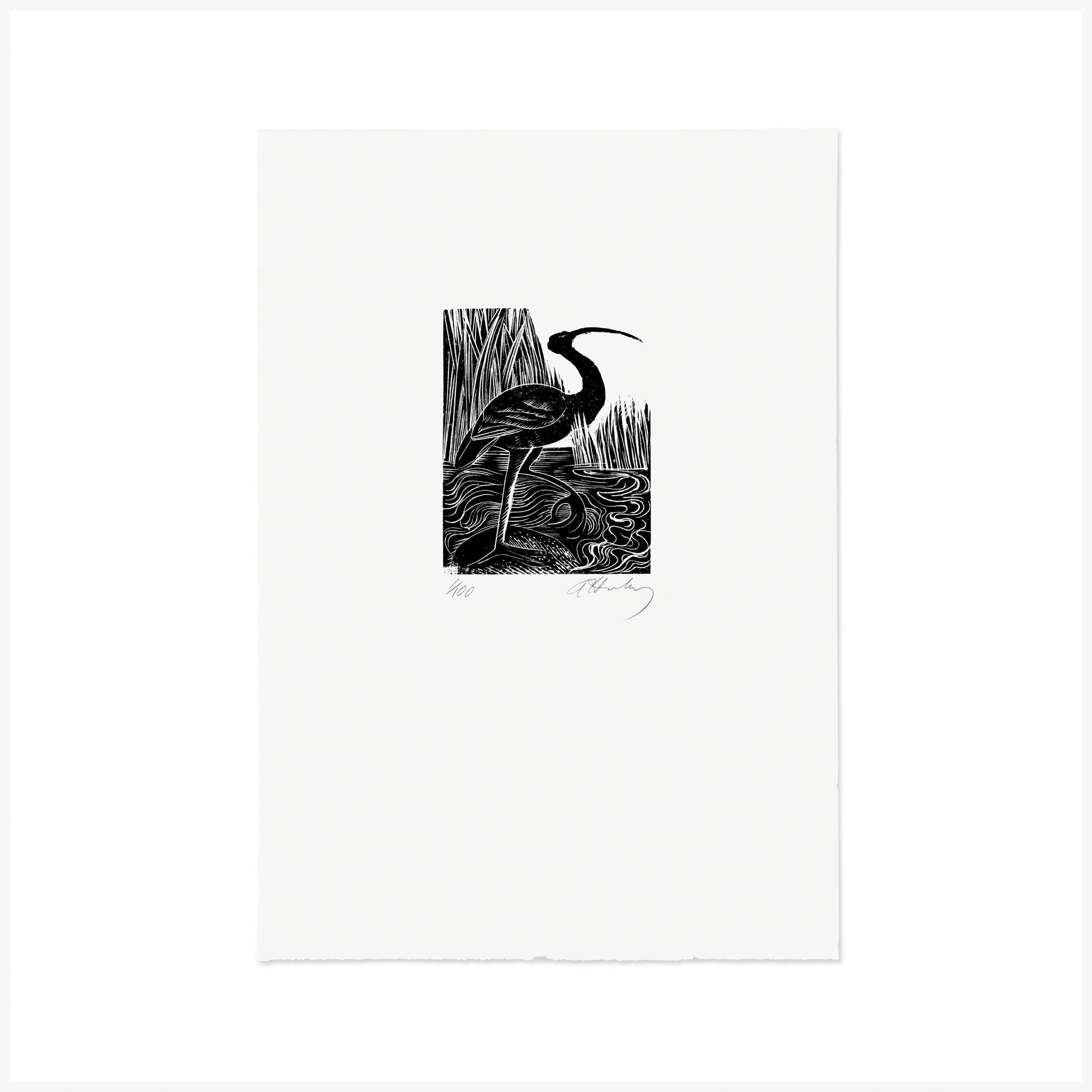 I is for Ibis, Wood Engraving by Angela Harding