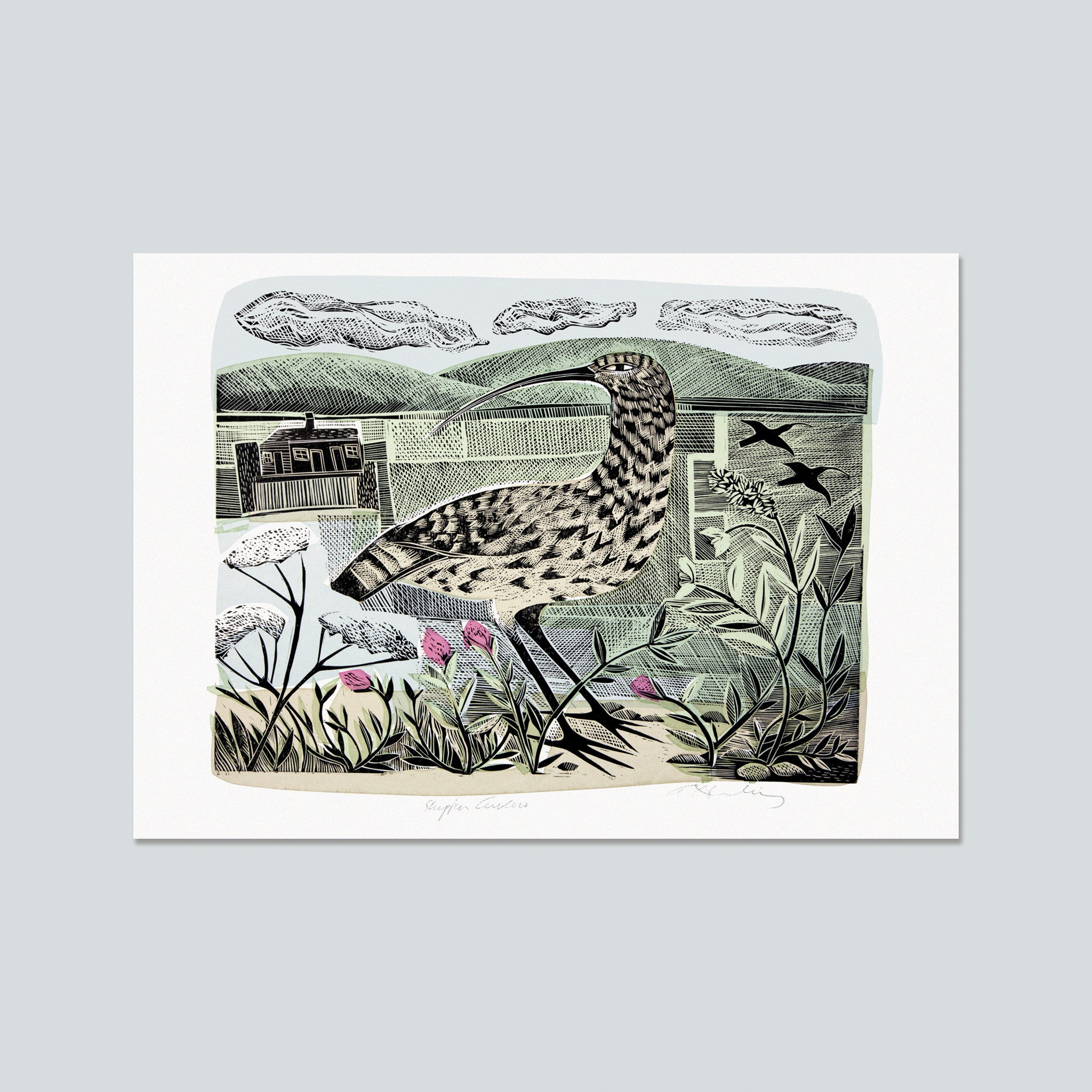 Shippen Curlew Postcard by Angela Harding
