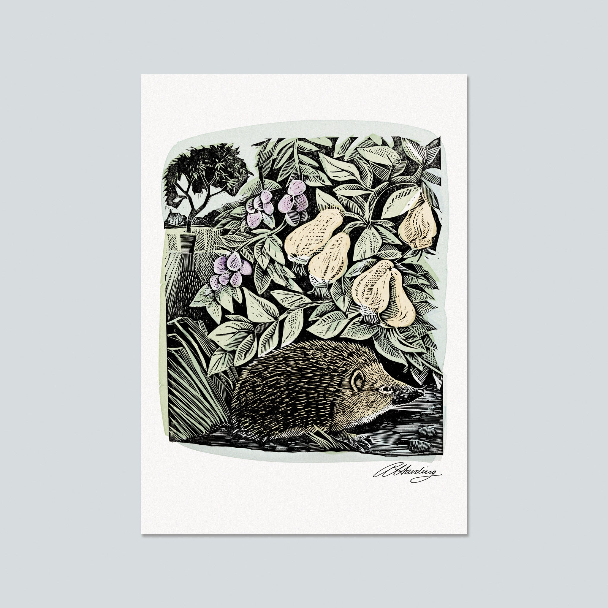 Hidden Hedgehog Postcard by Angela Harding