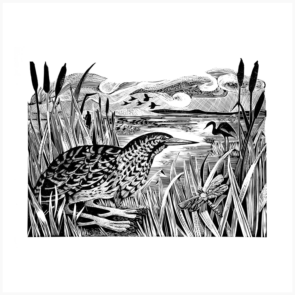 Bittern and Wetlands, Black and White Edition by Angela Harding
