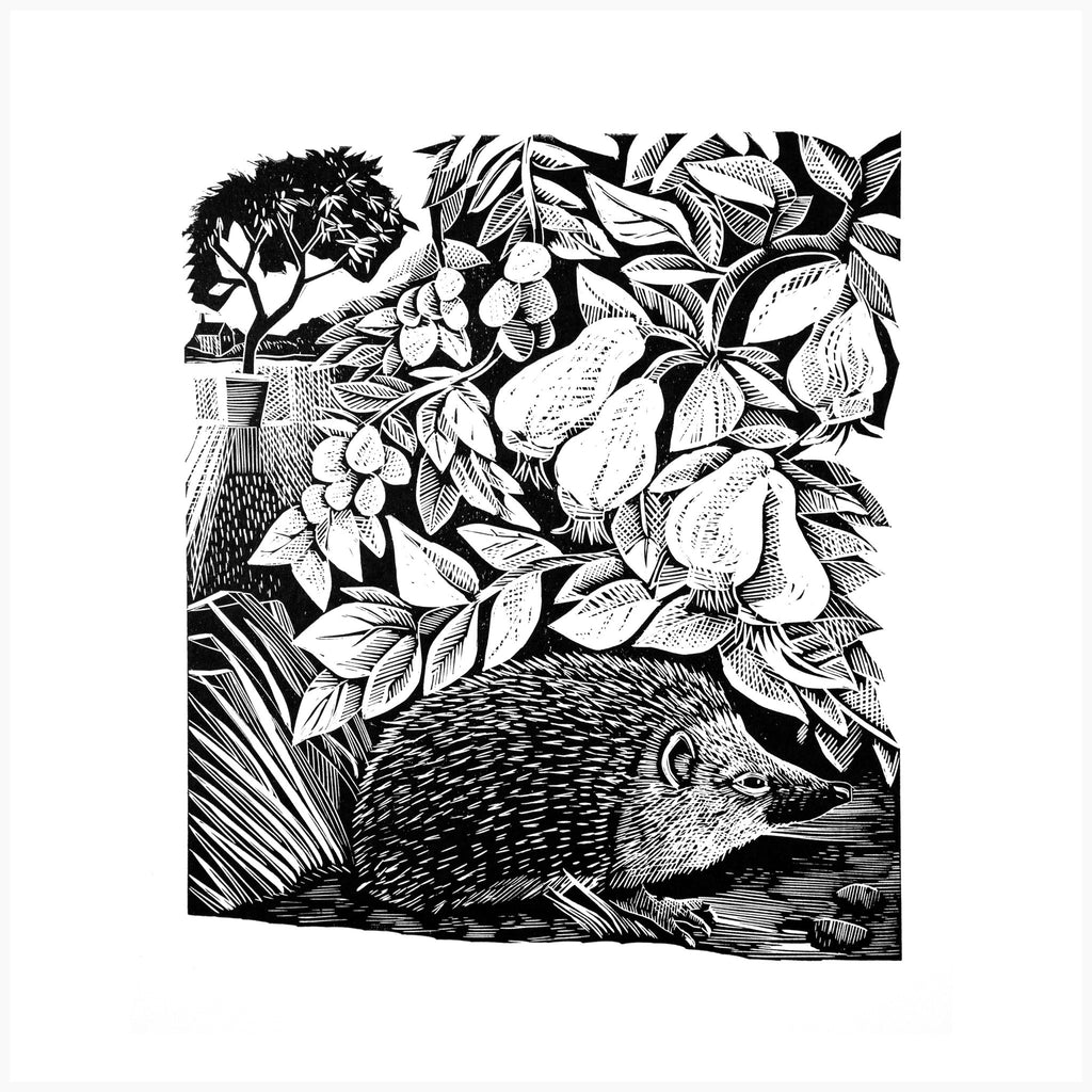 Hidden Hedgehog – Black and White Edition - Angela Harding