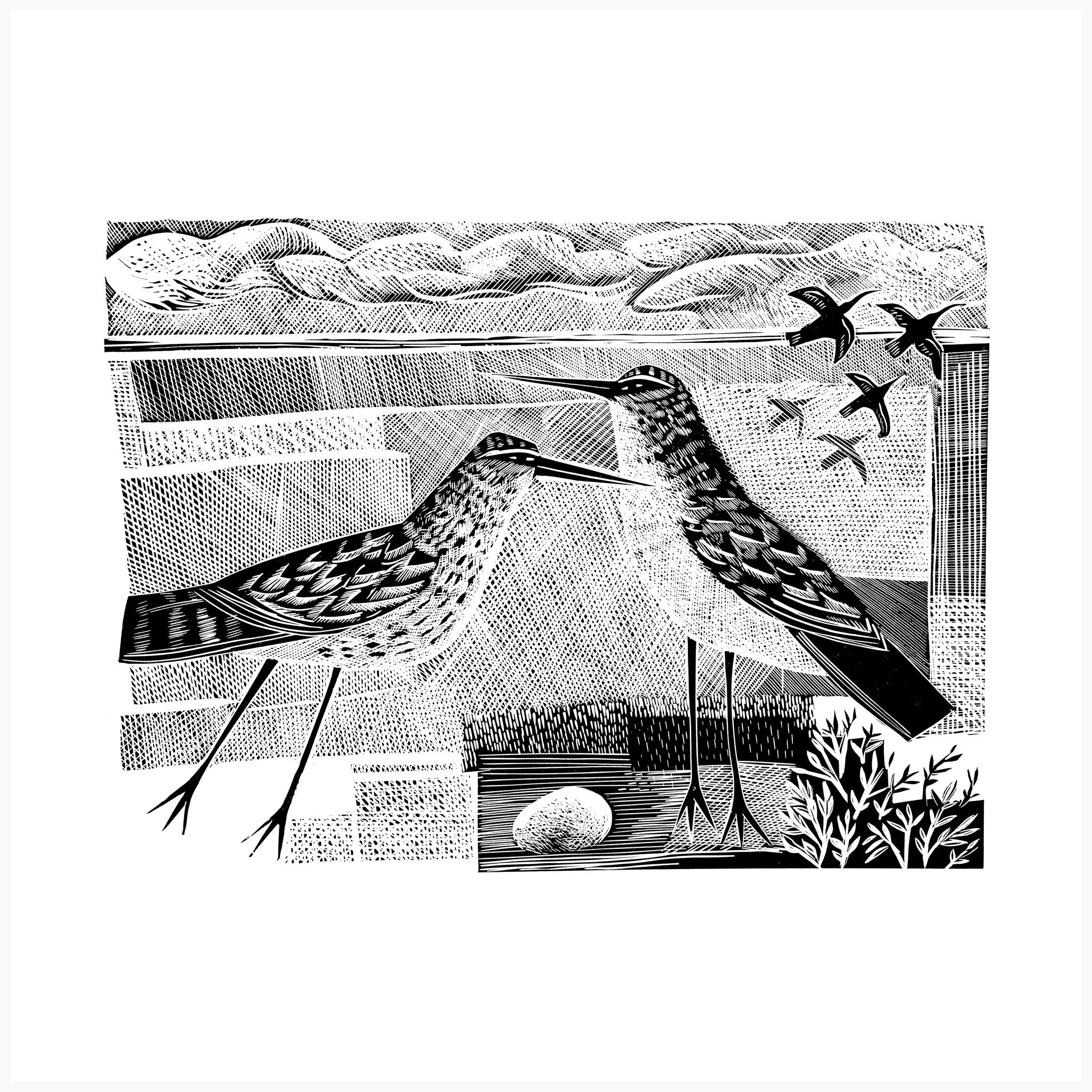 Norfolk Bird Black and White Edition, Linocut Print by Angela Harding