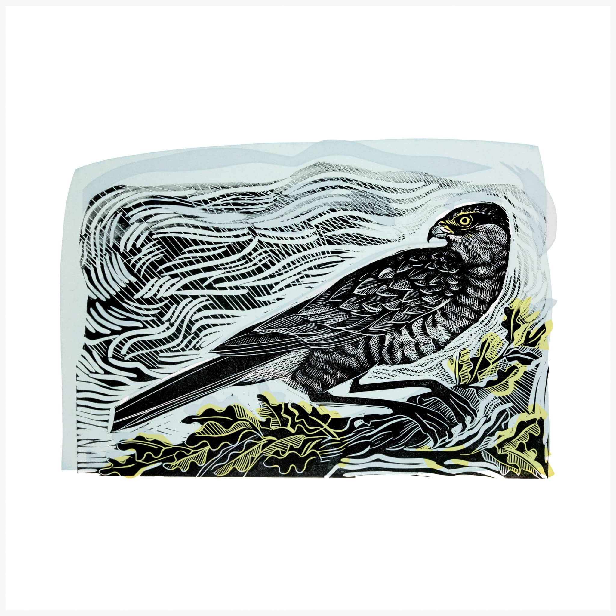Sparrow Hawk, a linocut and silkscreen print by Angela Harding