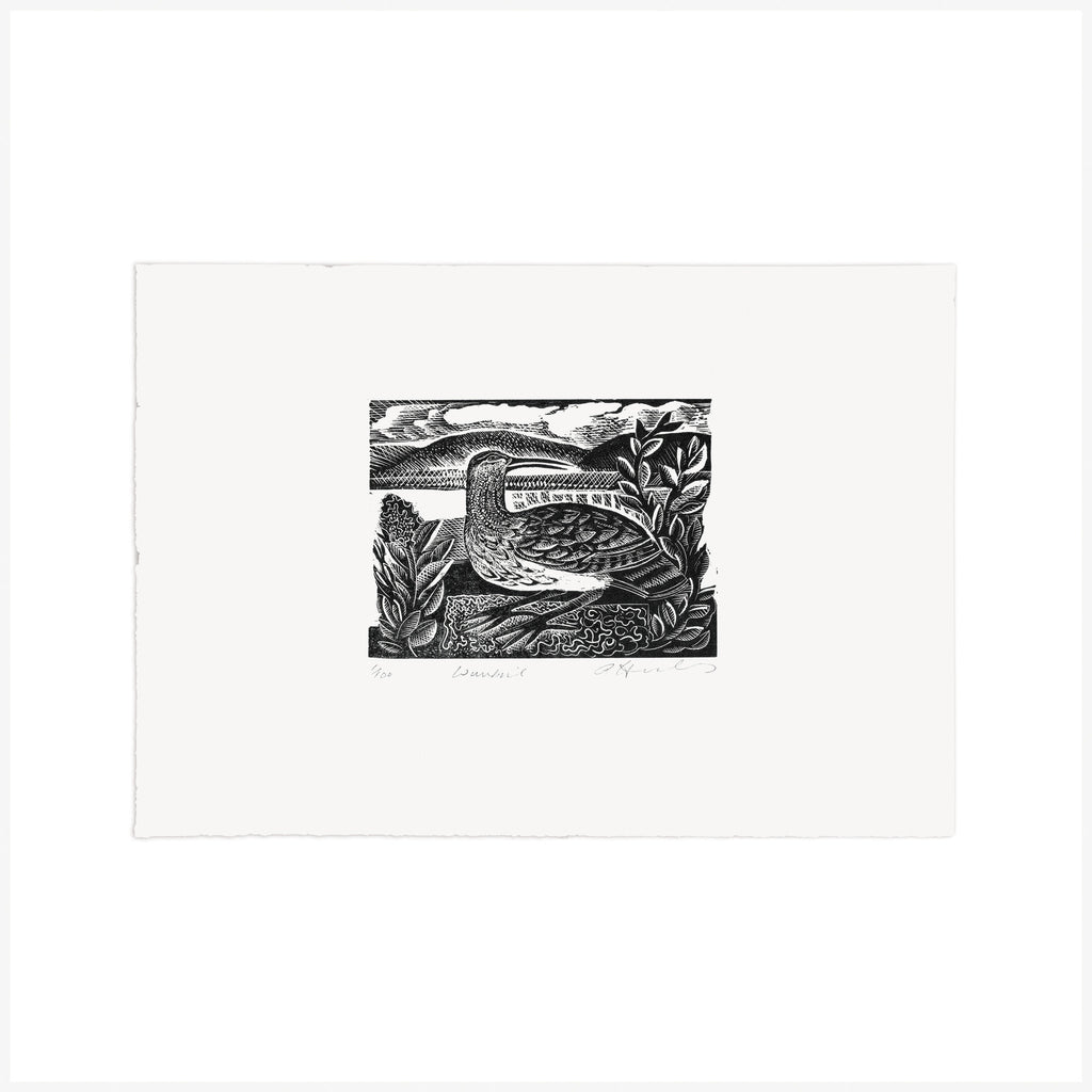 W is for Whimbrel – Wood Engraving - Angela Harding