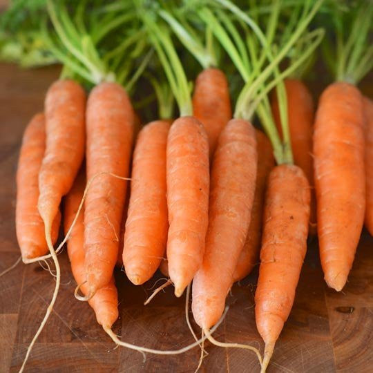 BUNCHED BABY CARROTS W/TOPS 24CT