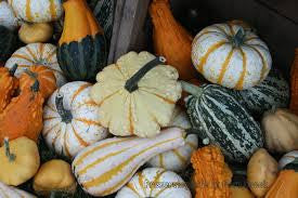 GOURDS, ASSORTED CS