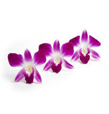ORCHIDS, EDIBLE 100CT