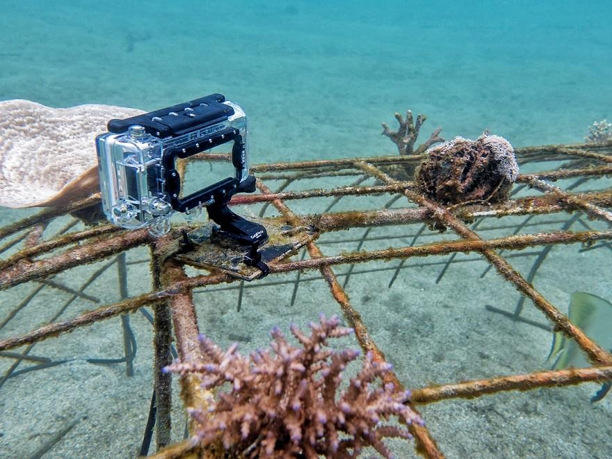 Customer Project in Progress: GoPro Underwater Time Lapse of Coral Reefs