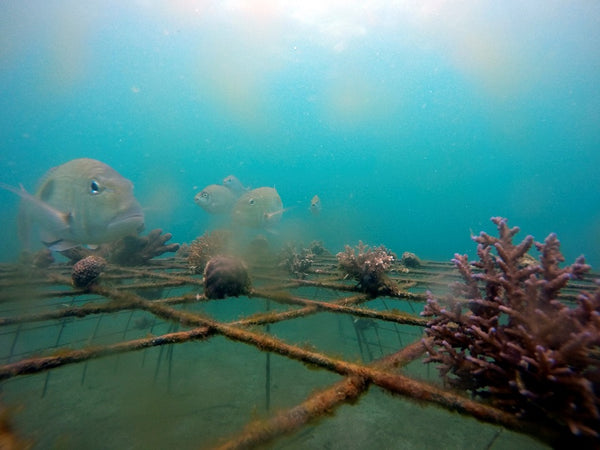 Customer Project in Progress: GoPro Underwater Time Lapse of