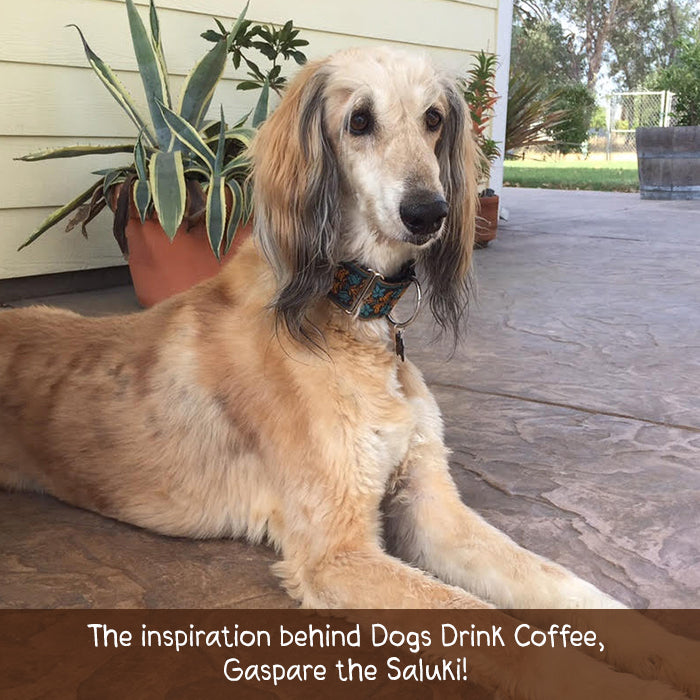 gaspare dogs drink coffee inspiration