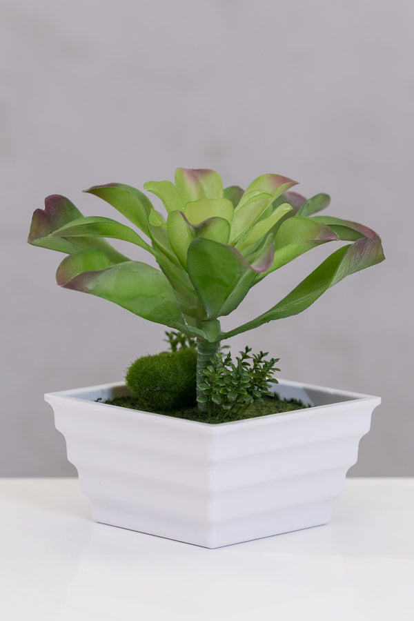Du Pot mix in square pot B - Casa Febus - Home • Design