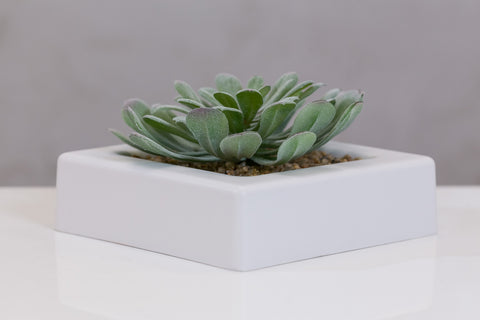 Du Pot mix in square pot - Gasteria Green - Casa Febus - Home • Design