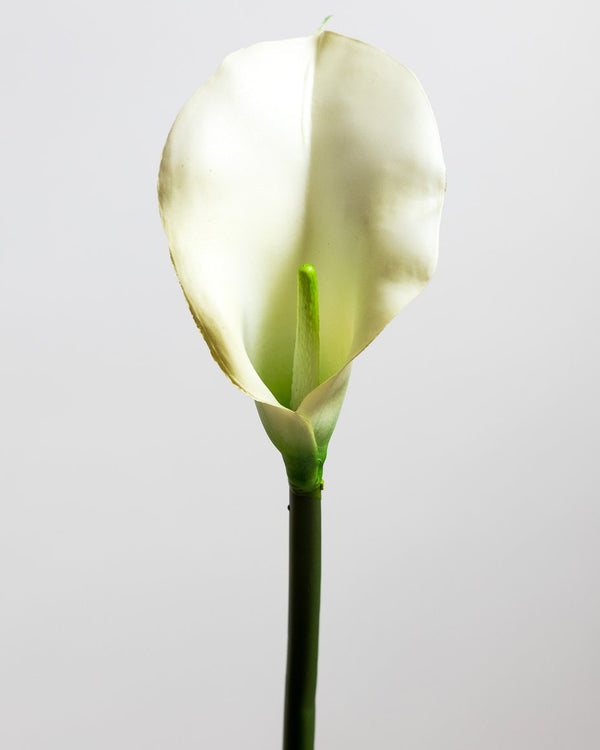 Calla Lily Ivory LG - Tropics Collection