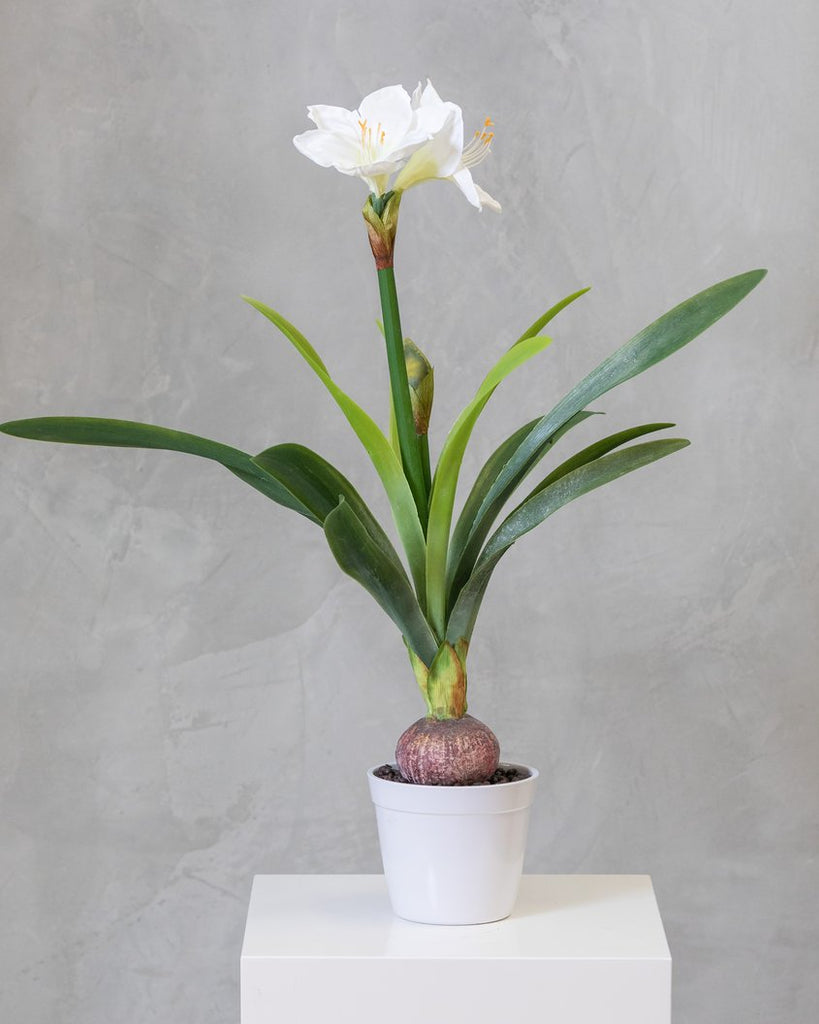 "34"" Amarillys Plant with White Flower on Pot - Tropics Collection"