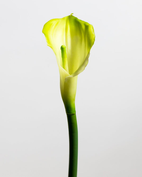 Calla Lily Cream/Green Medium - Tropics Collection