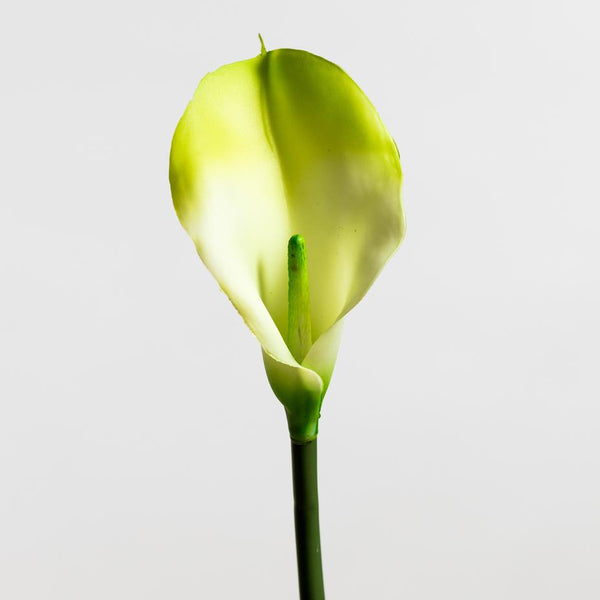 Calla Lily Cream/Green LG - Tropics Collection