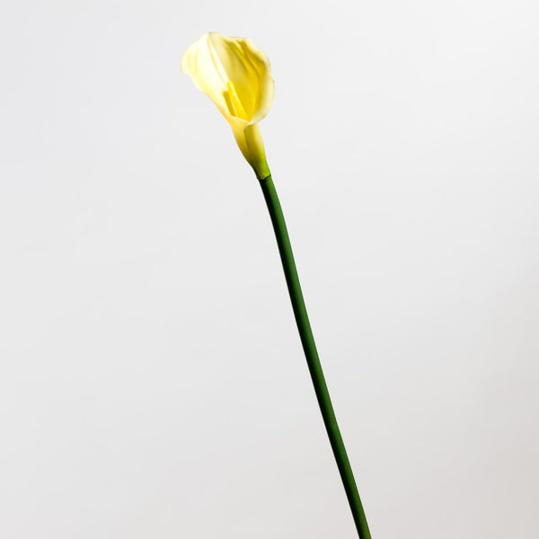 Calla Lily Yellow Medium - Tropics Collection