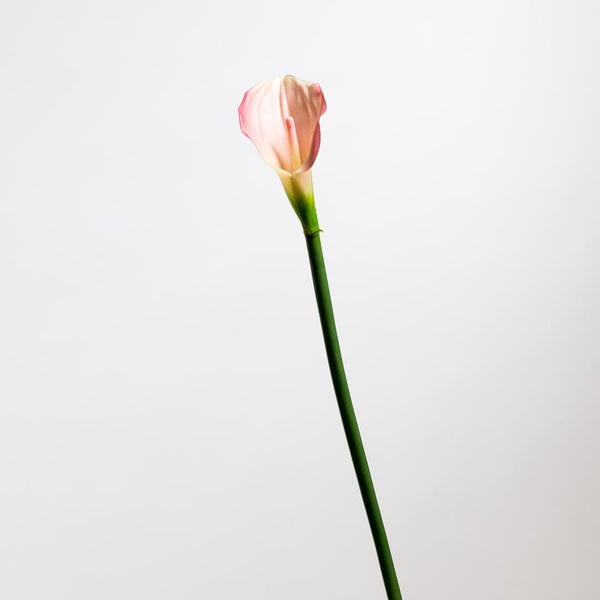 Calla Lily Pink Medium - Tropics Collection