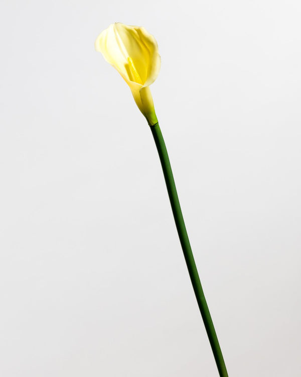 Calla Lily Yellow LG - Tropics Collection