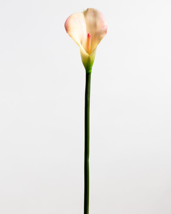 Calla Lily Pink LG - Tropics Collection