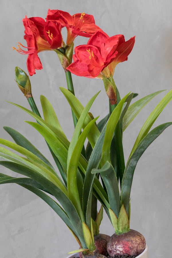 "32"" Amarillys Plant with Red Flowers on Pot - Tropics Collection $79.98"