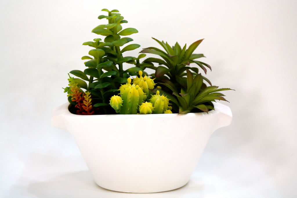 "Du Pot Assortment of Cactus in White Pot 8.5""H"