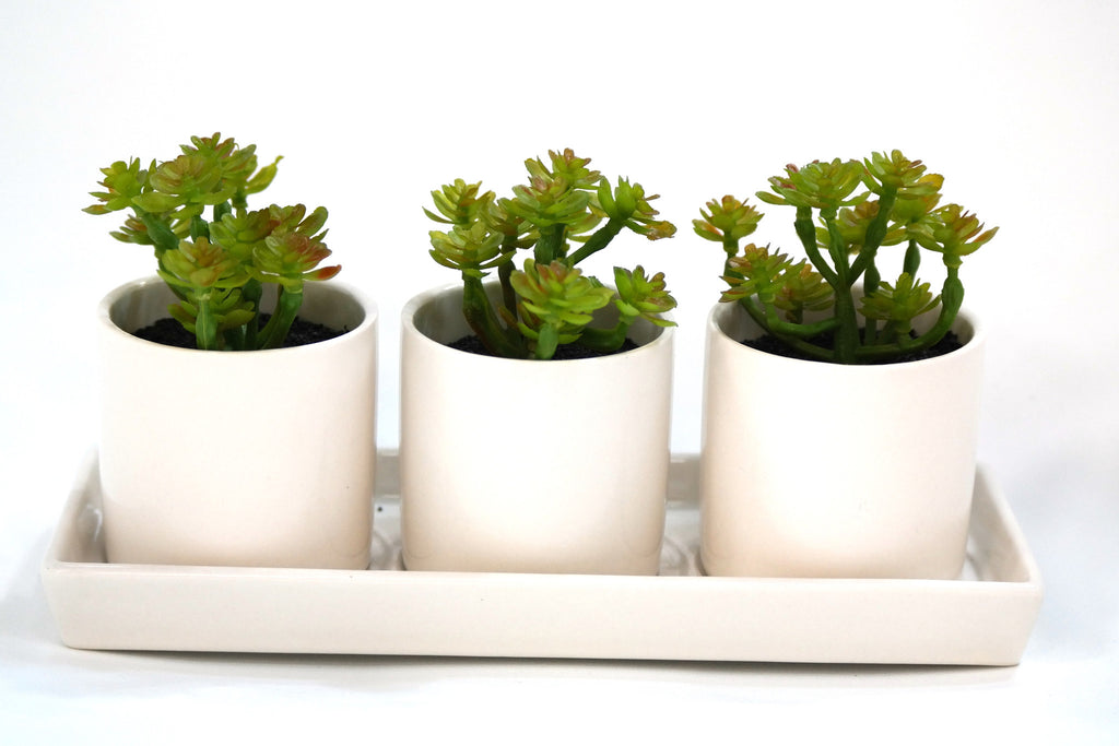 Du Pot Set of 3 Cactus - B  in White Pots