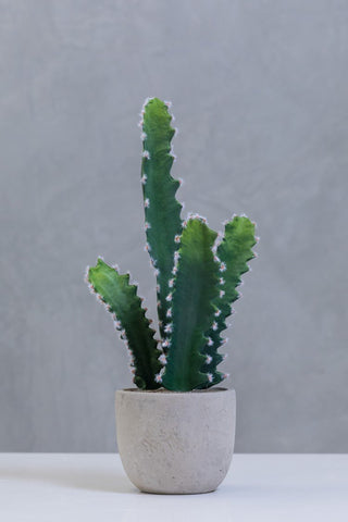 "18"" Mexican Cactus on Pot - Cacti Collection"