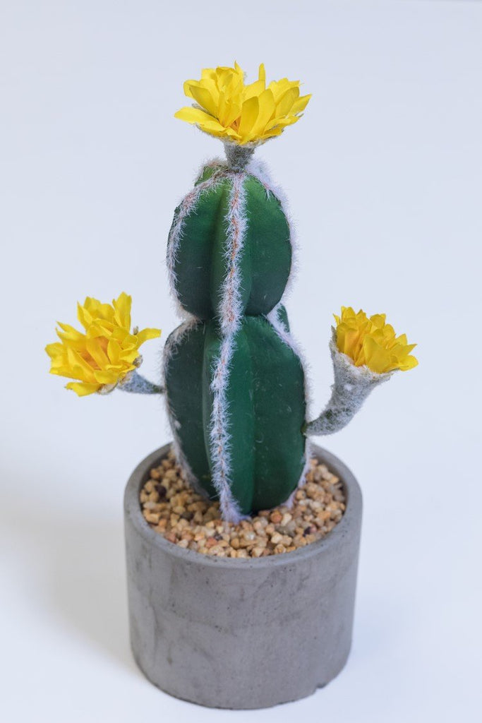 "12"" Yellow Flowers Cactus on Pot - Cacti Collection"
