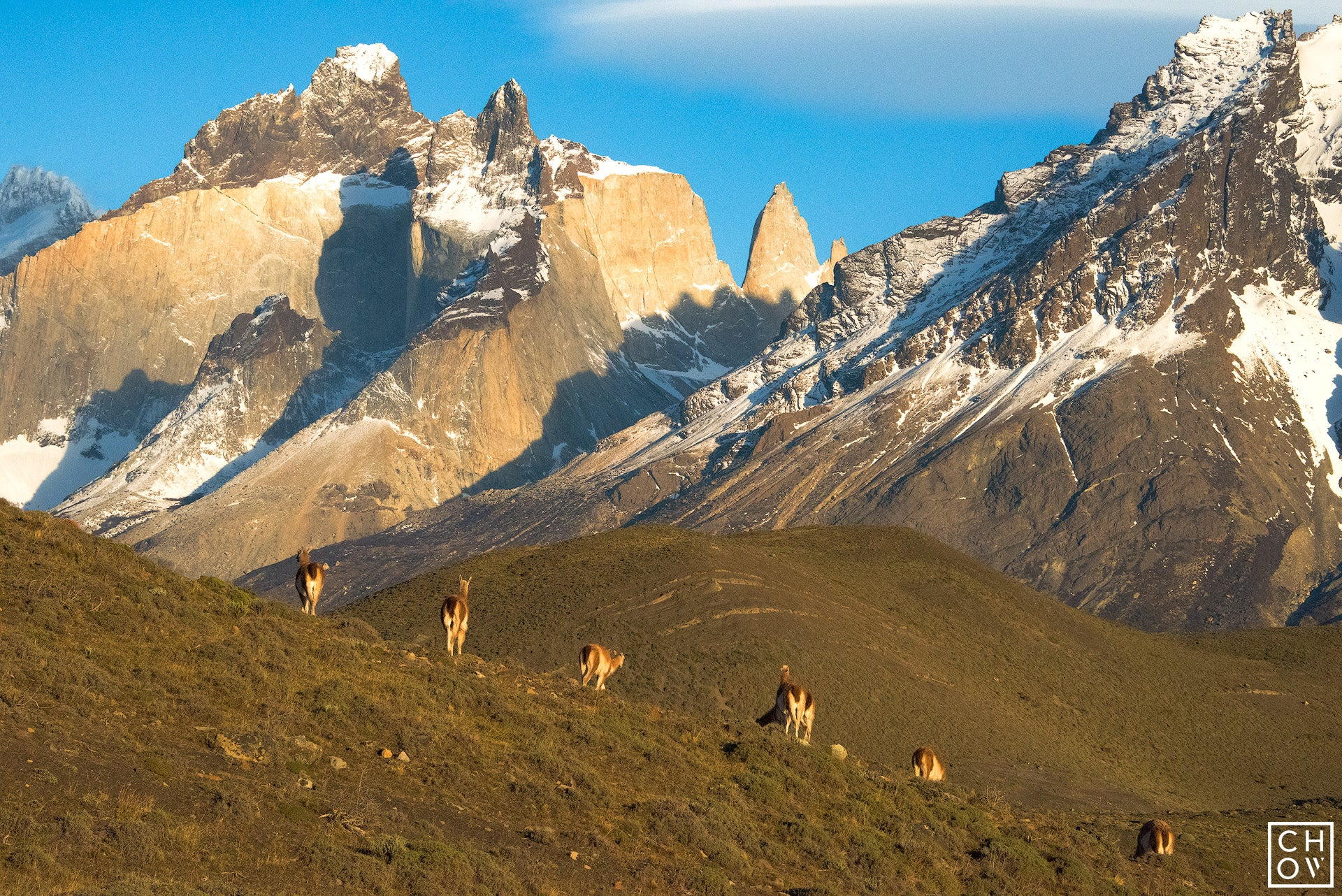 Good Morning Guanacos, Torres Del Paine National Park